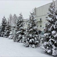 Воспоминания о снеге. :: Валерия Комова