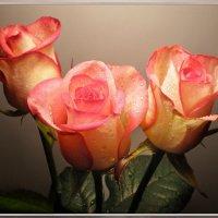Розовое трио :: Эля Юрасова