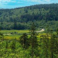 Мурманск. Грибные места. :: kolin marsh