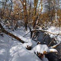 Наперекор морозному всесилью... :: Лесо-Вед (Баранов)