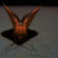 Ночная бабочка :: Елена Даньшина