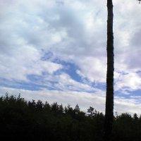Небо над лесом :: Сергей Гвоздев