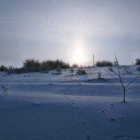 Экскурсия в Гадюкино зимой (13) :: Александр Резуненко