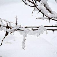Мы ценим, лишь когда теряем... :: Anna Gornostayeva