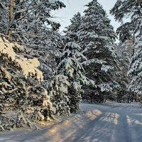 Оснежена лесная тишина... :: Лесо-Вед (Баранов)