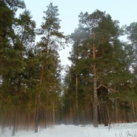 В лесу февраль . :: Мила Бовкун