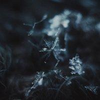 Снежинка :: Виктория Воробьёва
