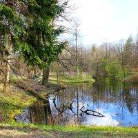 Шуваловский парк :: Алла Лямкина