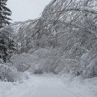После снегопада :: Светлана