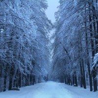 Снежная гавань :: Natalya Danilova