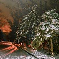 Мемориал зимой :: Ольга Назаренко