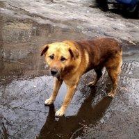 пес в февральской луже :: Александр Прокудин