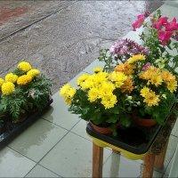 Цветы под дождём :: Нина Корешкова