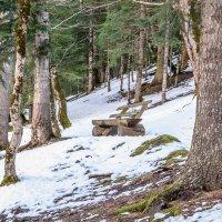 В заповедном лесу... :: Юлия Бабитко