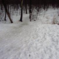 Февраль местами похожий на февраль :: Андрей Лукьянов