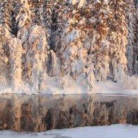 белая зима :: Александр