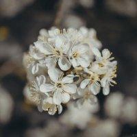 Воспоминания о весне) :: Виктория Воробьёва