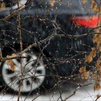 И  дождь.....  и снег...  Февраль, однако.... :: Валерия  Полещикова