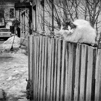 Высоко сижу, далеко гляжу :: Николай Белавин