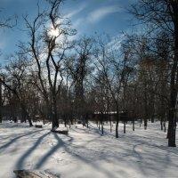 Мороз и солнце - день чудесный! :: Виктория Бондаренко