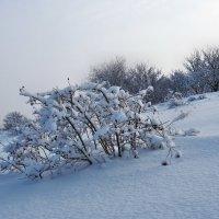 Экскурсия в Гадюкино зимой (17) :: Александр Резуненко