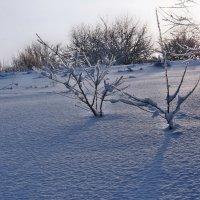 Экскурсия в Гадюкино зимой (18) :: Александр Резуненко