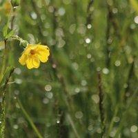 Аленький цветочек :: Александр Велигура