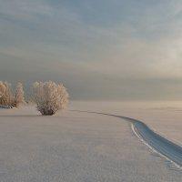 По озеру стелется туман. :: Галина .
