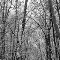 Пасмурно в лесу.. :: Юрий Стародубцев