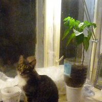 Кошка на окошке :: Mary Коллар