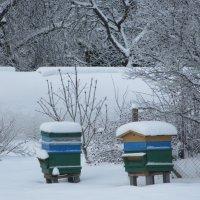 В зимней спячке :: Mariya laimite