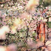 Весна наступила :: Alena Karpova