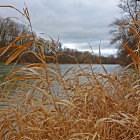 Ветренный  февраль... :: Galina Dzubina