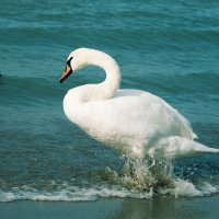 Лебединый побег :: Елена Нор