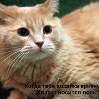 Моя котейка :: Ксения Максудова