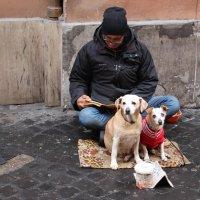 Собачья работа. :: vadimka