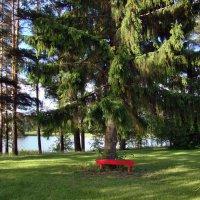 Красная скамейка :: ♛ Г.Король
