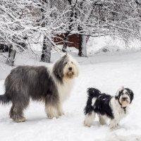 после снегопада :: Лариса Батурова