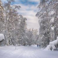 Зимний день :: vladimir