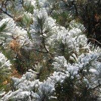 И к нам залетел снежок! :: Варвара