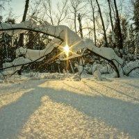 Солнце на снегу :: Фролов Владимир Александрович