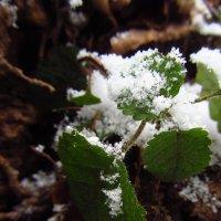 Первая зелень года - зимой! :: Андрей Лукьянов