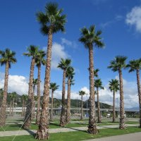 Пальмы в Олимпийском парке :: Вера Щукина