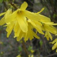 Южное цветение :: Булаткина Светлана