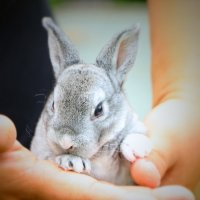 cute babu bunny :: Natalya секрет
