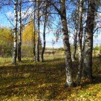 Я из лесу вышел... :: Владимир Щеглов