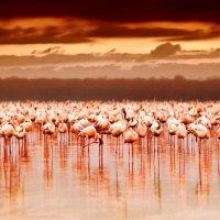 ОЗЕРО МАНЬЯРА (ТАНЗАНИЯ) :: Volmar Safaris