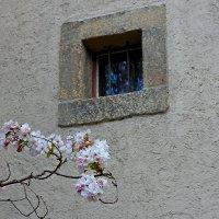 У стенки :: Михаил Лесин