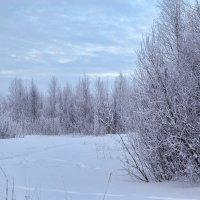 Холодный лес :: Наталья Копылова