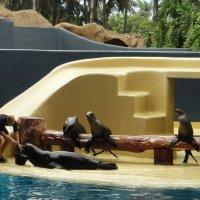 Лоро парк - Пуэрто де ла Круз. Шоу морских котиков :: Елена Павлова (Смолова)